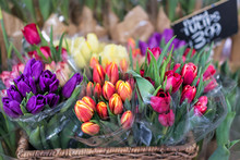 Purple, Red, Pink, Orange And Striped Tulip Bouquets Closeup Wrapped In Plastic In Store Market With Sign In Basket