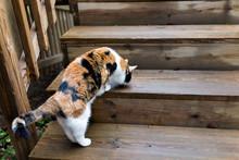 Calico Cat Curious Exploring H...