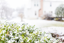 Snow Flakes On Green Decorativ...