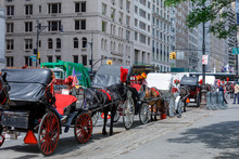 Horse And Carriage At Central Park, NYC