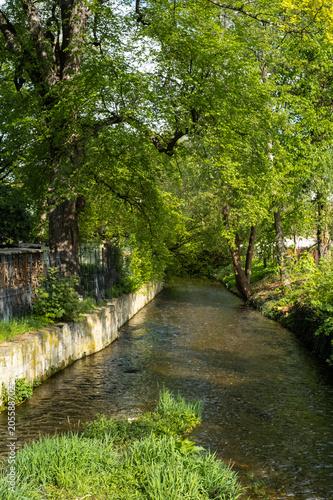 Foto op Canvas Weg in bos Quedlinburg im Frühjahr