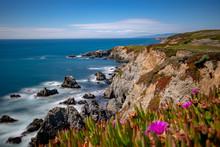 Bodega Bay Head 3