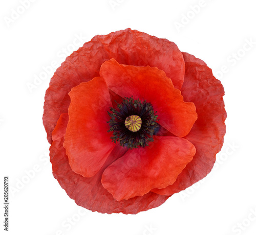 Foto auf Leinwand Mohn Bright red poppy flower isolated on white ,top view