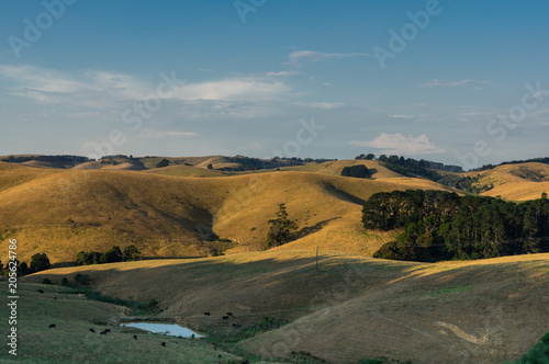 Fotografiet  Green rolling hills of South Gippsland in Victoria, Australia.