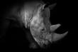 canvas print picture - Nashorn in schwarz- weiß