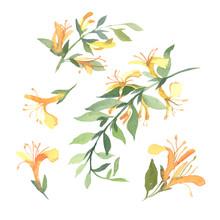 Set Of Watercolor Yellow Lonic...