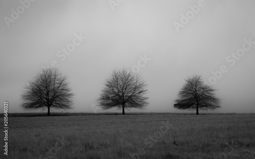 Photo Black and white picture of trees with copy space background