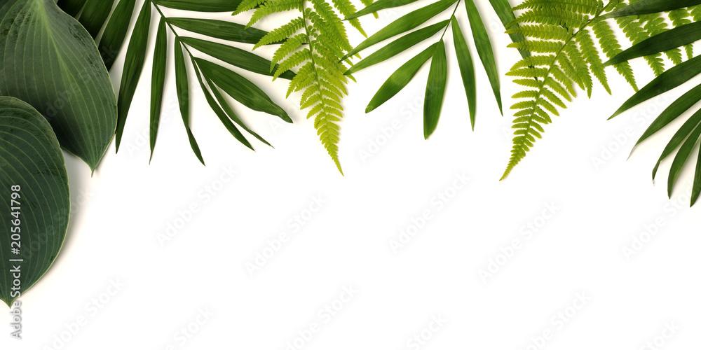 Fototapety, obrazy: frame of green leaves
