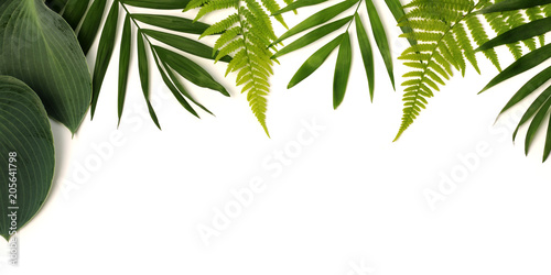 Printed kitchen splashbacks Plant frame of green leaves