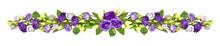 Purple Eustoma Flowers In A Li...