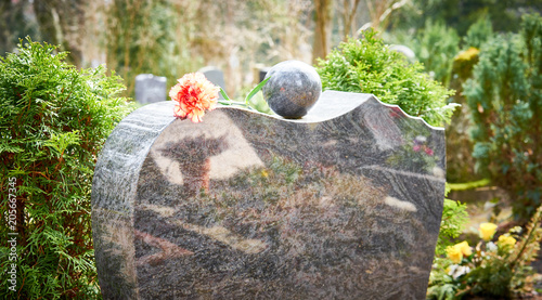 Obraz Grief at cemetery / Red carnation on gravestone / Tombstone - fototapety do salonu