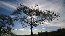 Skylit Tree