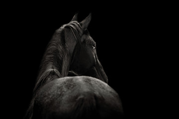 Portrait of a beautiful black horse on a black background