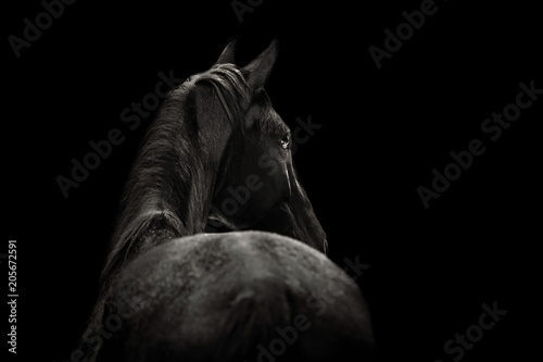 Fotografía  Portrait of a beautiful black horse on a black background