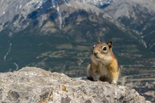 Curious Chipmunk At The Top Of...