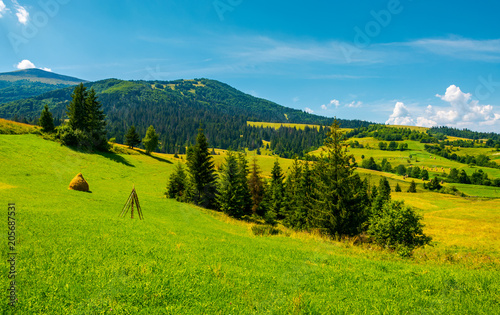 In de dag Blauwe jeans mountainous rural area on a bright summer day. rolling hills with haystacks and spruce forest. mountain ridge in the far distance.