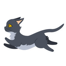 Grey Cat Running