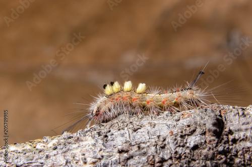 Foto op Plexiglas Macrofotografie Macro Worm on a Branch