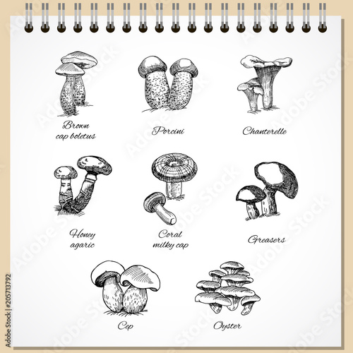 Fotografie, Obraz  Ink Edible Mushrooms Set