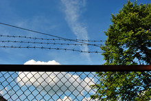 Green Tree Behind Jail Barbed Wire Grid Fence, Spring Sunny Landscape With Blue Cloudy Sky Background
