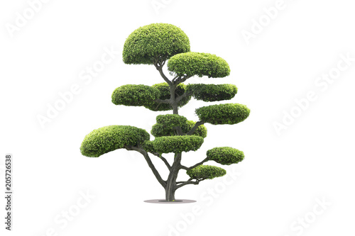 Fotobehang Bonsai bonsai tree in garden isolated on white background