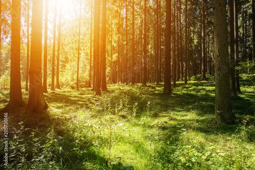 drzewa-lesne-natura-zachod-slonca-laka
