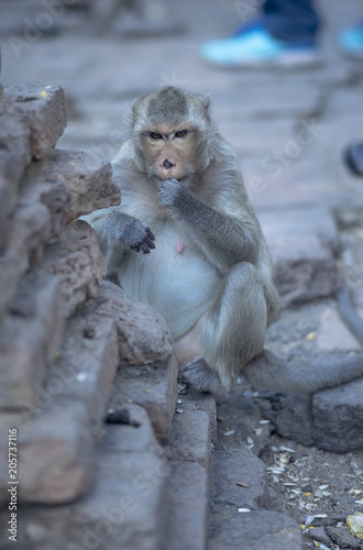 Foto op Canvas Aap close up monkey Lopburi Thailand