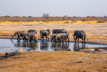 Elephants Gather By One Of The...