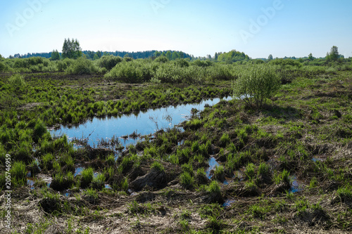 Fotografia, Obraz  Landscape with natural water body, grass, bushes, trees on the horizon