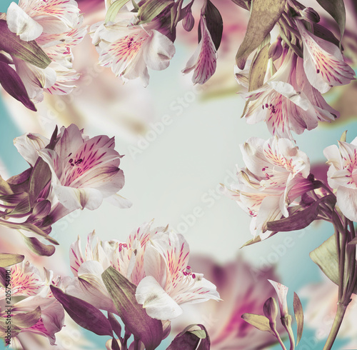 Foto op Canvas Bloemen Beautiful floral pastel color layout frame with pink flowers at turquoise background