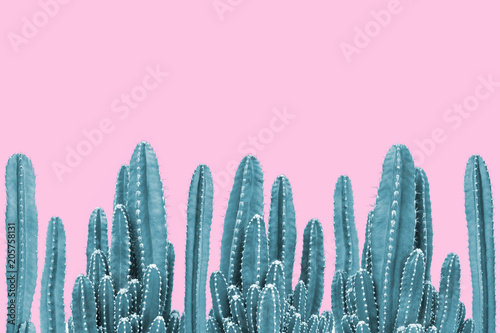 Foto op Canvas Cactus Green cactus on pink background