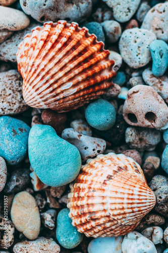 Valokuva  Conchas marinhas coloridas