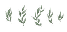 Vector Set. Bay Leaf. Green Le...