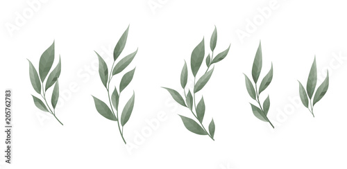 Vector set. Bay leaf. Green leaves on white background. Vector illustration.