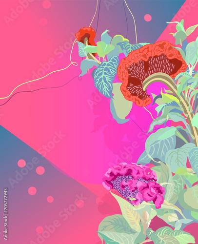 Valokuva  Cockscomb tropical bright pink background