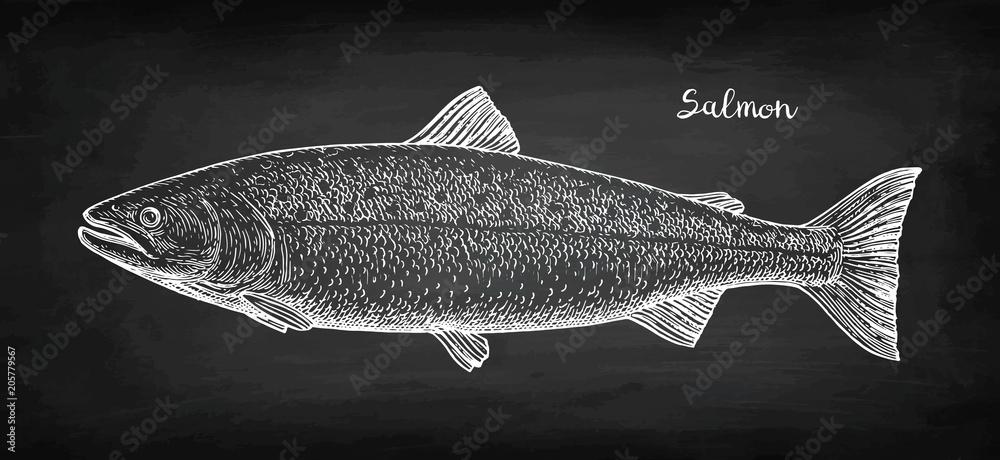 Fotografia Chalk sketch of salmon