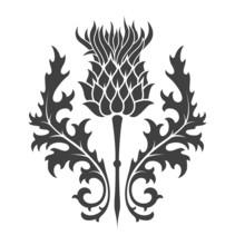 Thistle, Heraldic Symbol Of Sc...