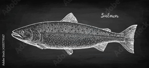 Fotografia Chalk sketch of salmon