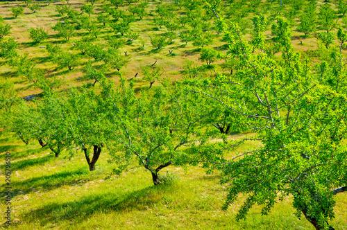 In de dag Lime groen Villanueva de Algaida, Andalusia, Spain