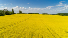 Aerial View Of Colorful Rapeseed Field In Spring With Blue Sky In Ukraine.