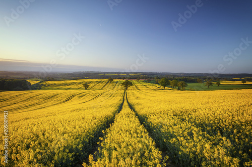 Poster Village Hilly Rapeseed Field at Sunrise