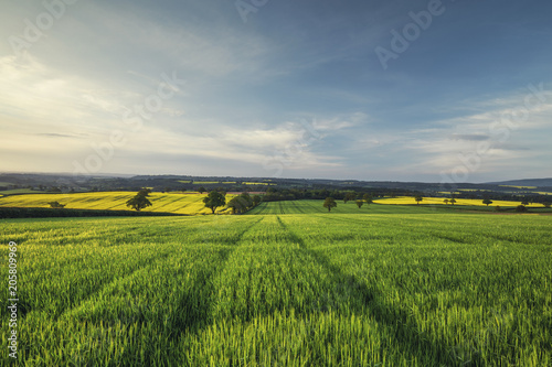 Photo  Sunrise Light over Green Wheat Field at Spring