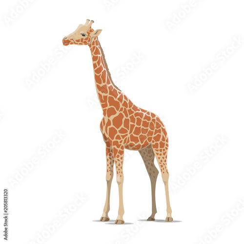 Fototapeta premium Żyrafa wektor dzikie zwierzę na białym tle ikona