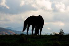 Grazing Horse In Vermont Again...