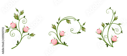 Fototapeta Set of vector decorative elements with pink rosebuds isolated on a white background. obraz