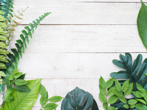 Tropical plant green leaves on white vintage wood.