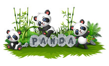 Panda Is Playing Together In Garden