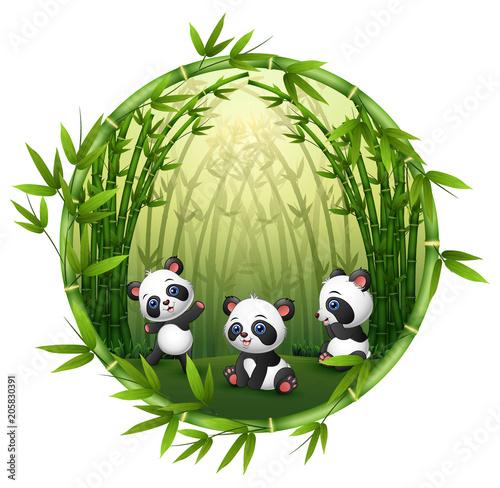 Fototapeta premium Pandy bawią się w bambusie
