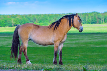 portrait of a horse in a meadow