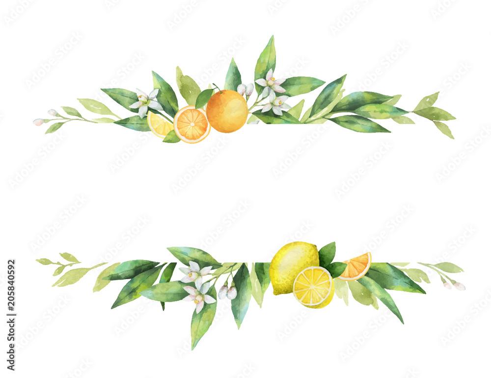 Fototapeta Watercolor vector banner of citrus fruits and leaves.